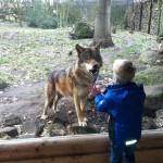 Thore und der böse Wolf