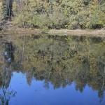 herfst 2013 in Emlichheim (3)